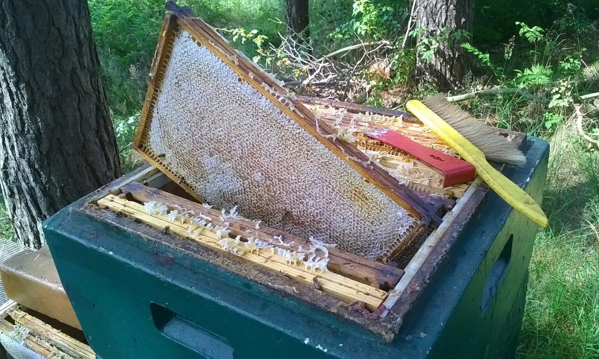Bienenschade